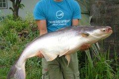 01-2006, Thailand Chiang Mai, Giant Catfish, Mekong 18,500 kg, Christian B Andersen