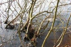 14-02-2006, Døde karper mellem grene, Studentersøen